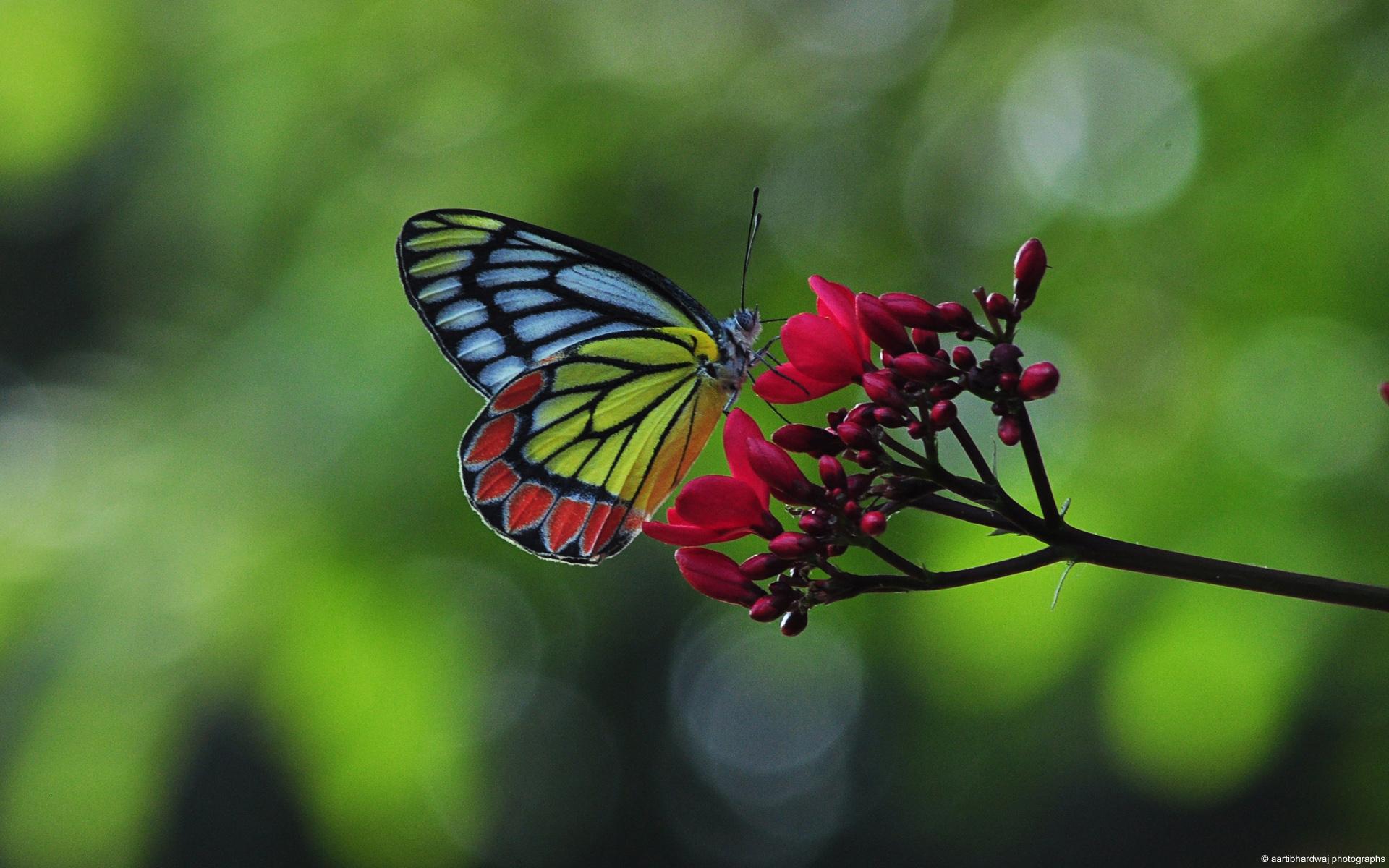 papillon-dans-la-nature