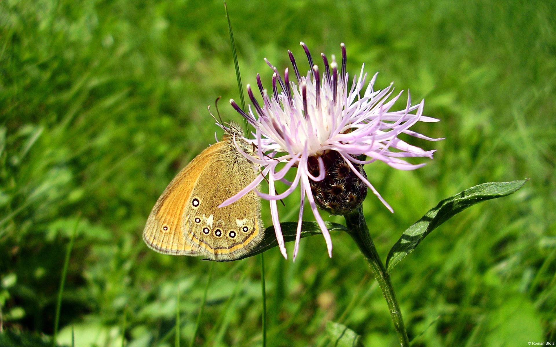 papillon-dans-la-nature_02