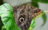 papillon-qui-butine_03