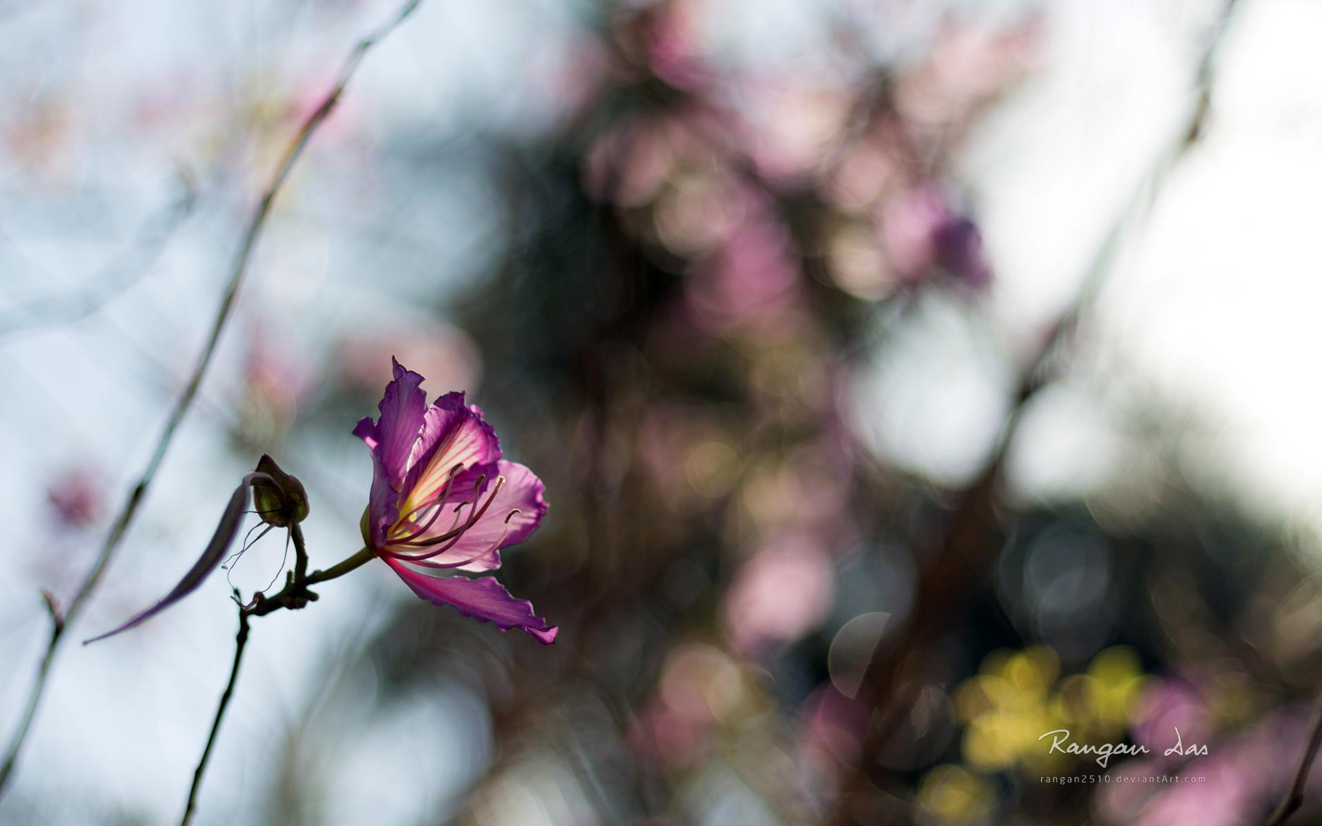 couleurs-des-fleurs