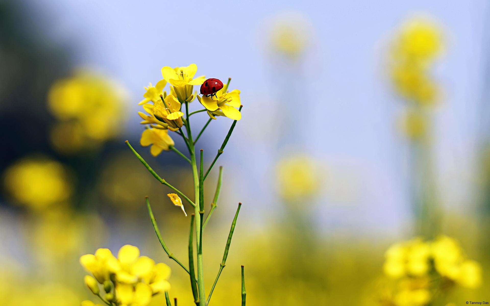 couleurs-des-fleurs_02