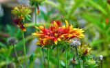couleurs-des-fleurs_03