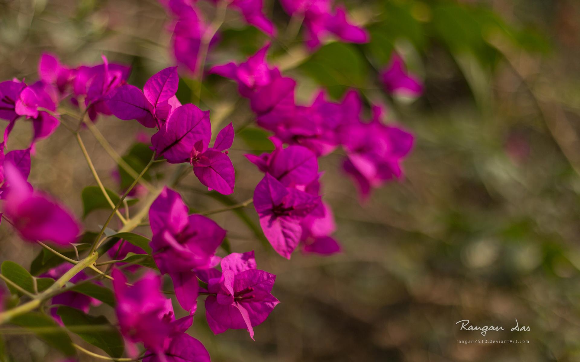 fleurs-dans-la-nature