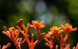 fleurs-dans-la-nature_02