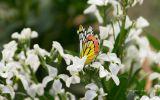 fleurs-dans-la-nature_03