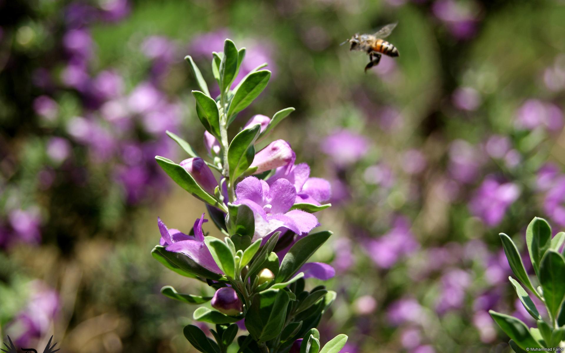 fleurs-dans-la-nature_04