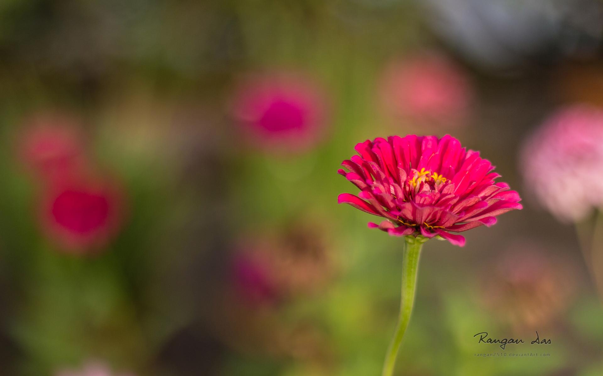 macro-photo-les-fleurs_02