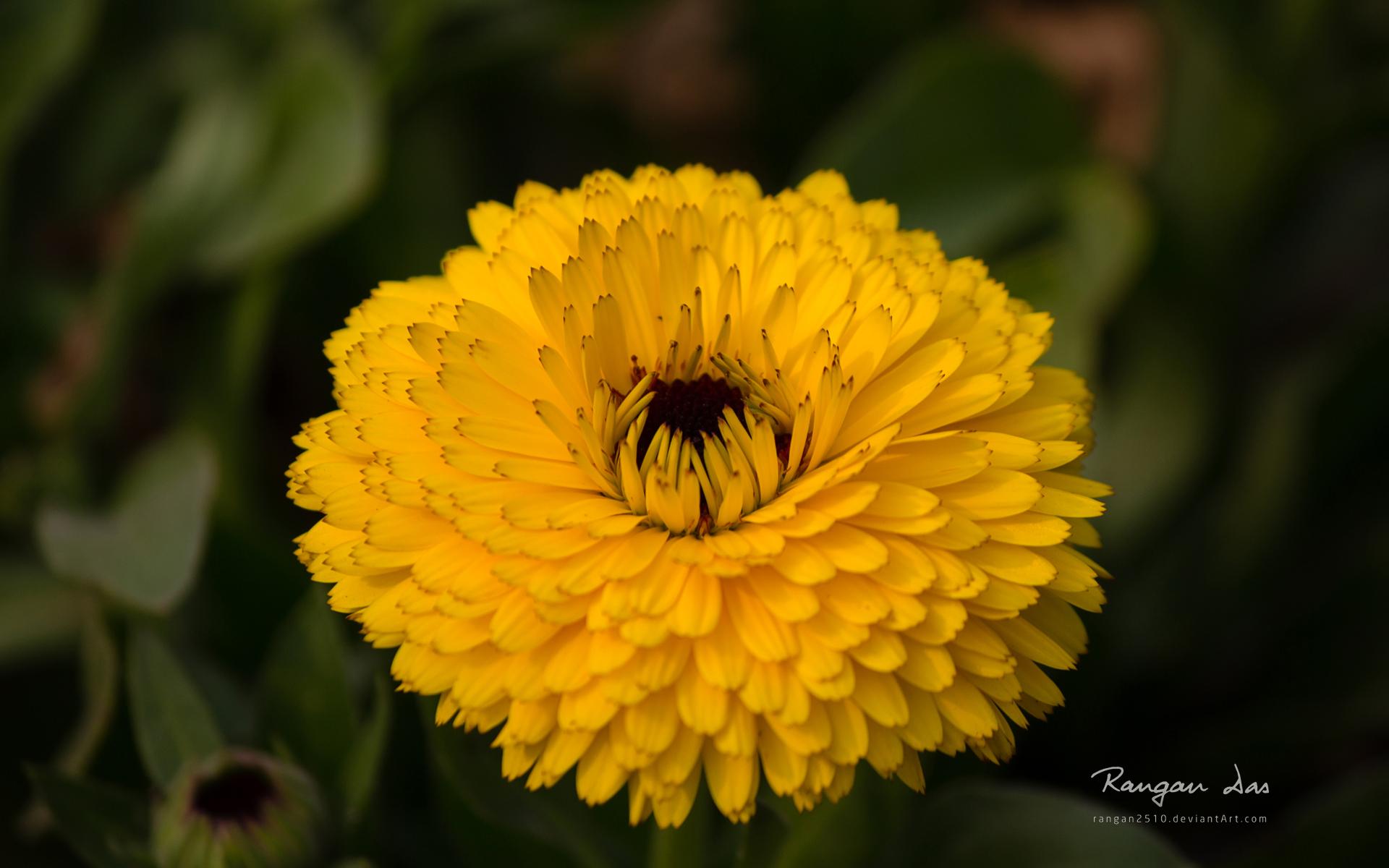 macro-photo-les-fleurs_03
