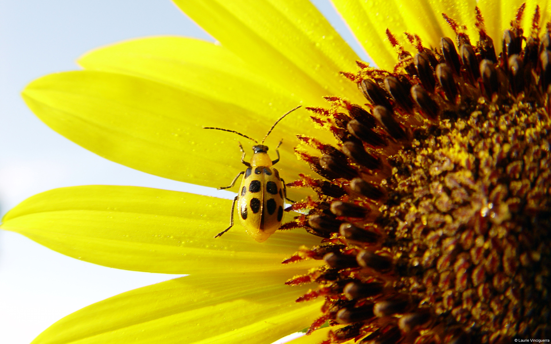 macro-photo-les-fleurs_04