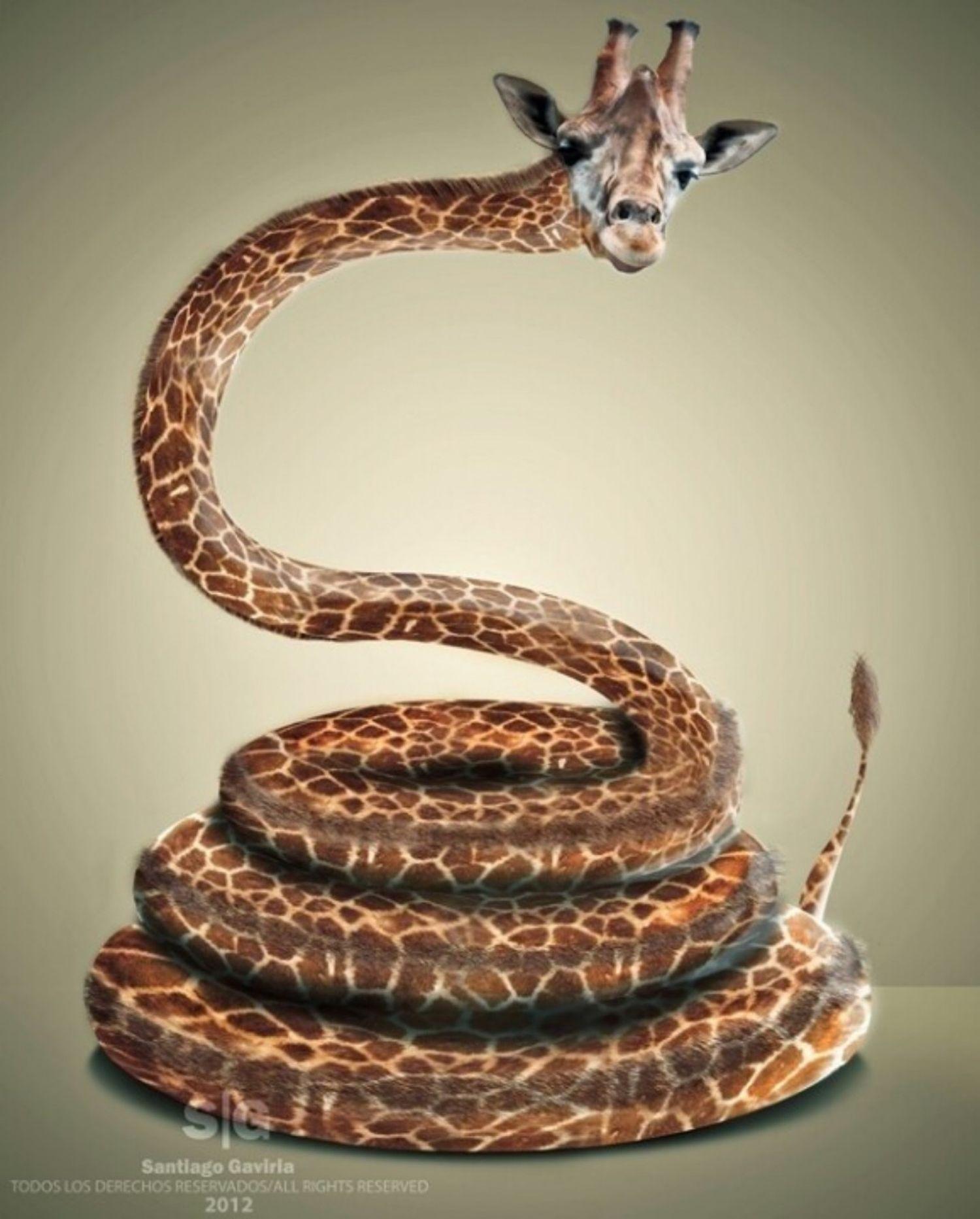 girapent