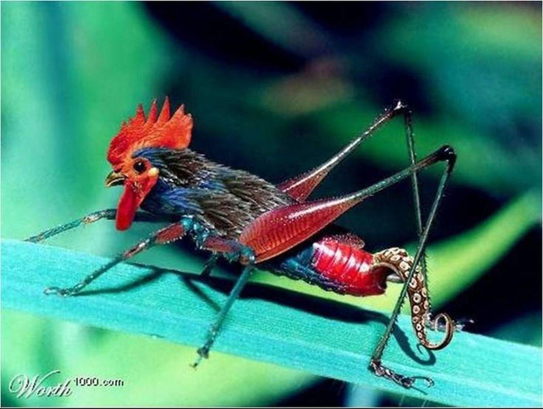 insectcoq.jpg