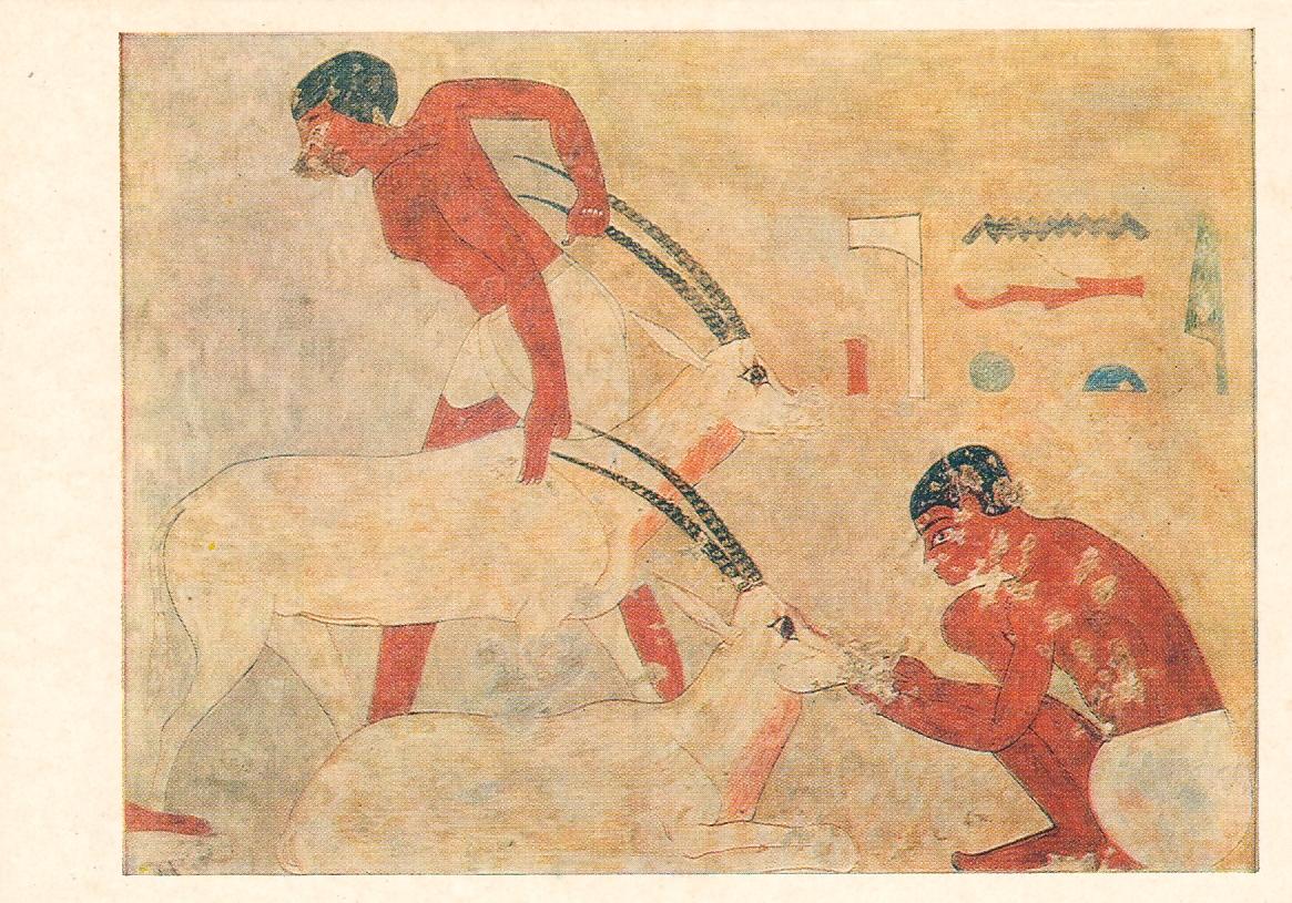 ancien-papyrus-egyptien
