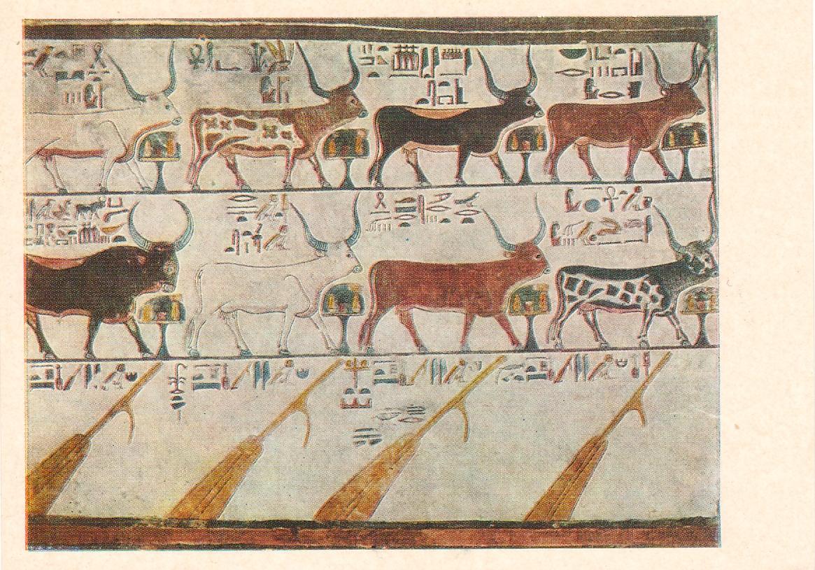 papyrus-egypte-ancienne_02