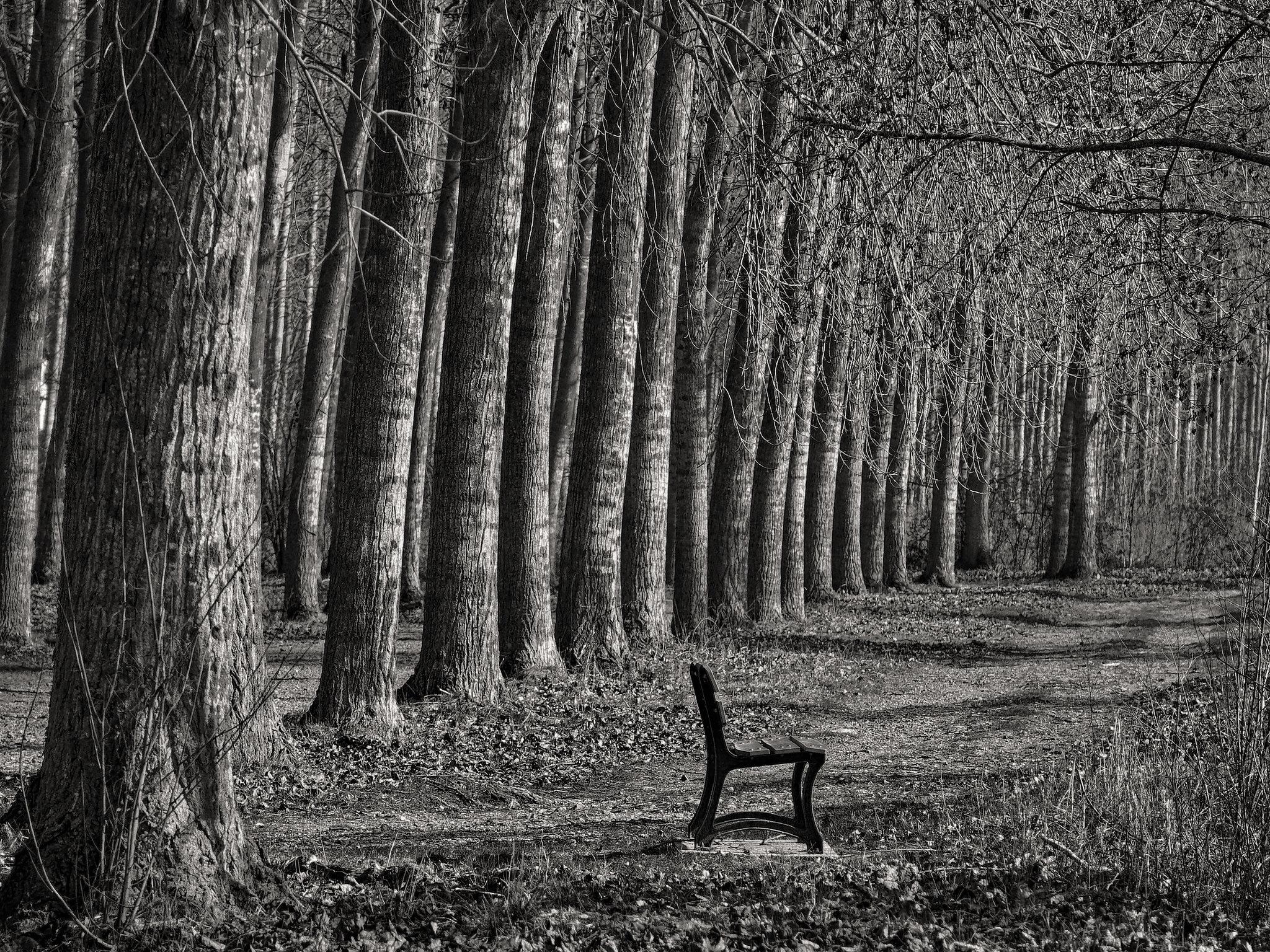 arbres-en-noir-et-blanc