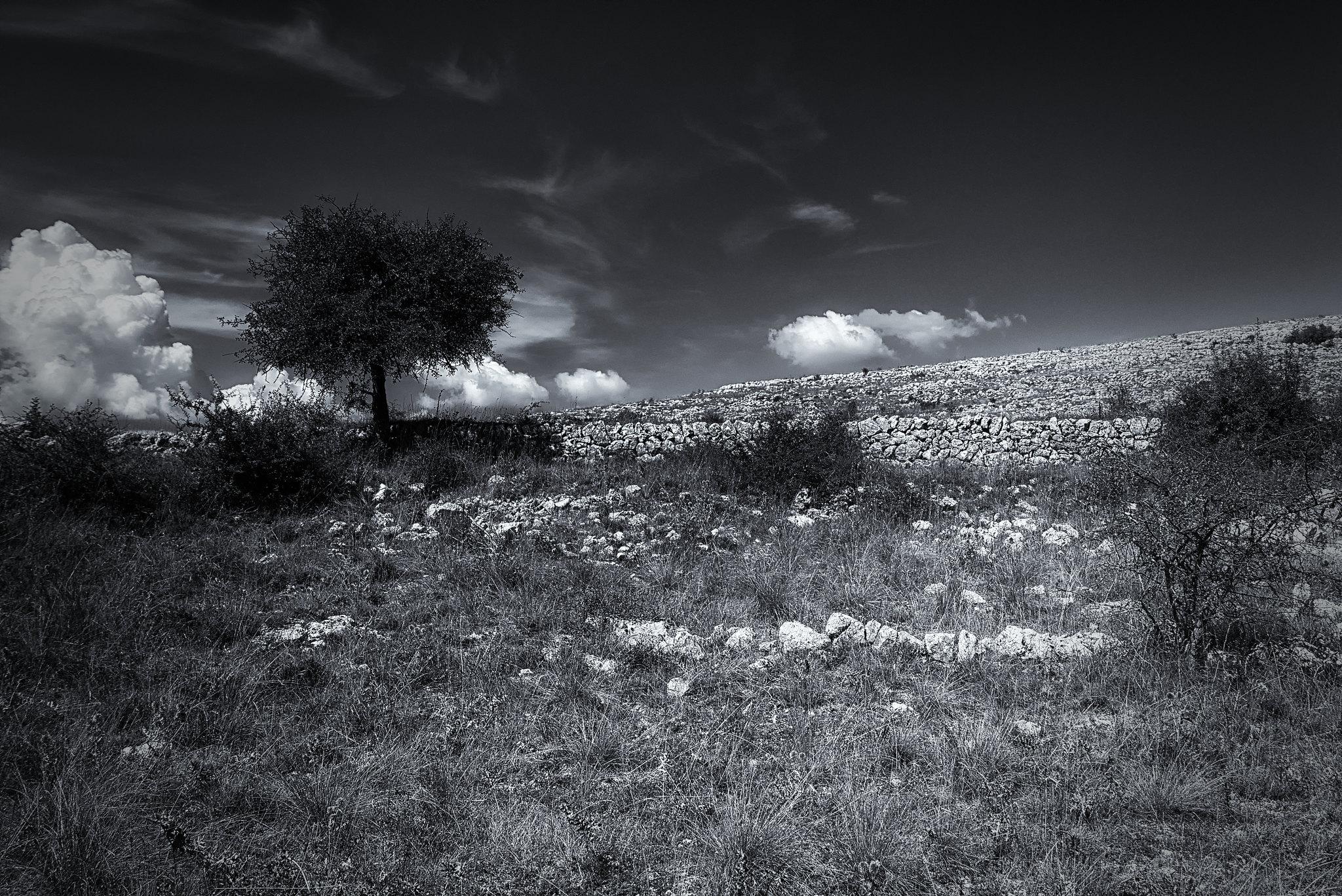 photo-de-paysage-champetre