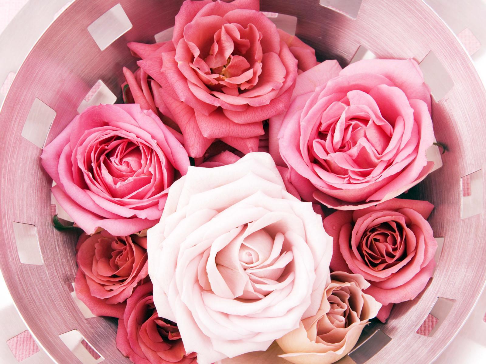 Roses,wallpapers free, fonds d'écran gratuits